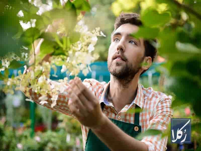 نمونه قرارداد اجاره باغ سیب